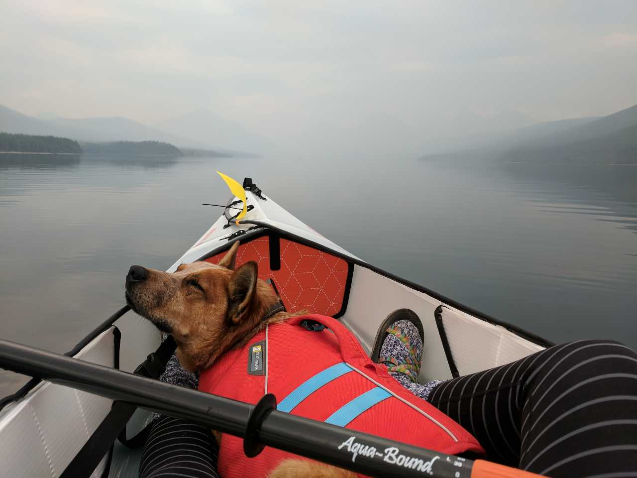 dog in lifejacket asleep on kayak